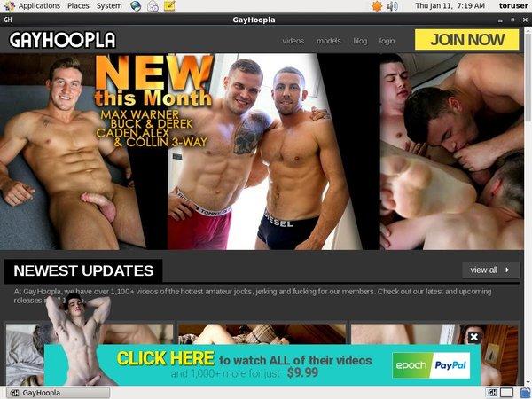 Daily Gay Hoopla Acc